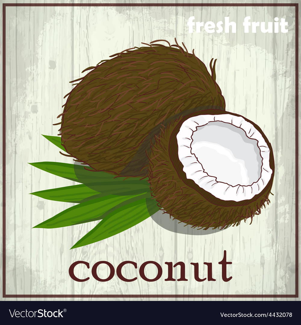 Hand drawing of coconut fresh fruit sketch vector | Price: 1 Credit (USD $1)