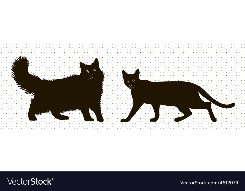Silhouettes siberian and bengal cat vector | Price: 1 Credit (USD $1)