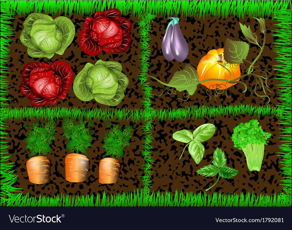 Vegetable garden vector | Price: 1 Credit (USD $1)