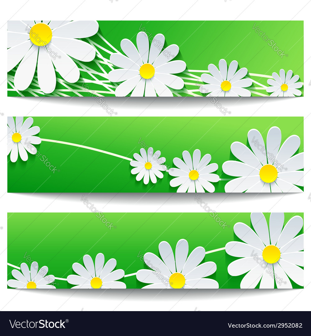 Set of floral banners with chamomile vector | Price: 1 Credit (USD $1)