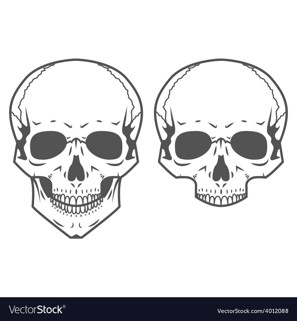 Different skulls on white background vector | Price: 1 Credit (USD $1)