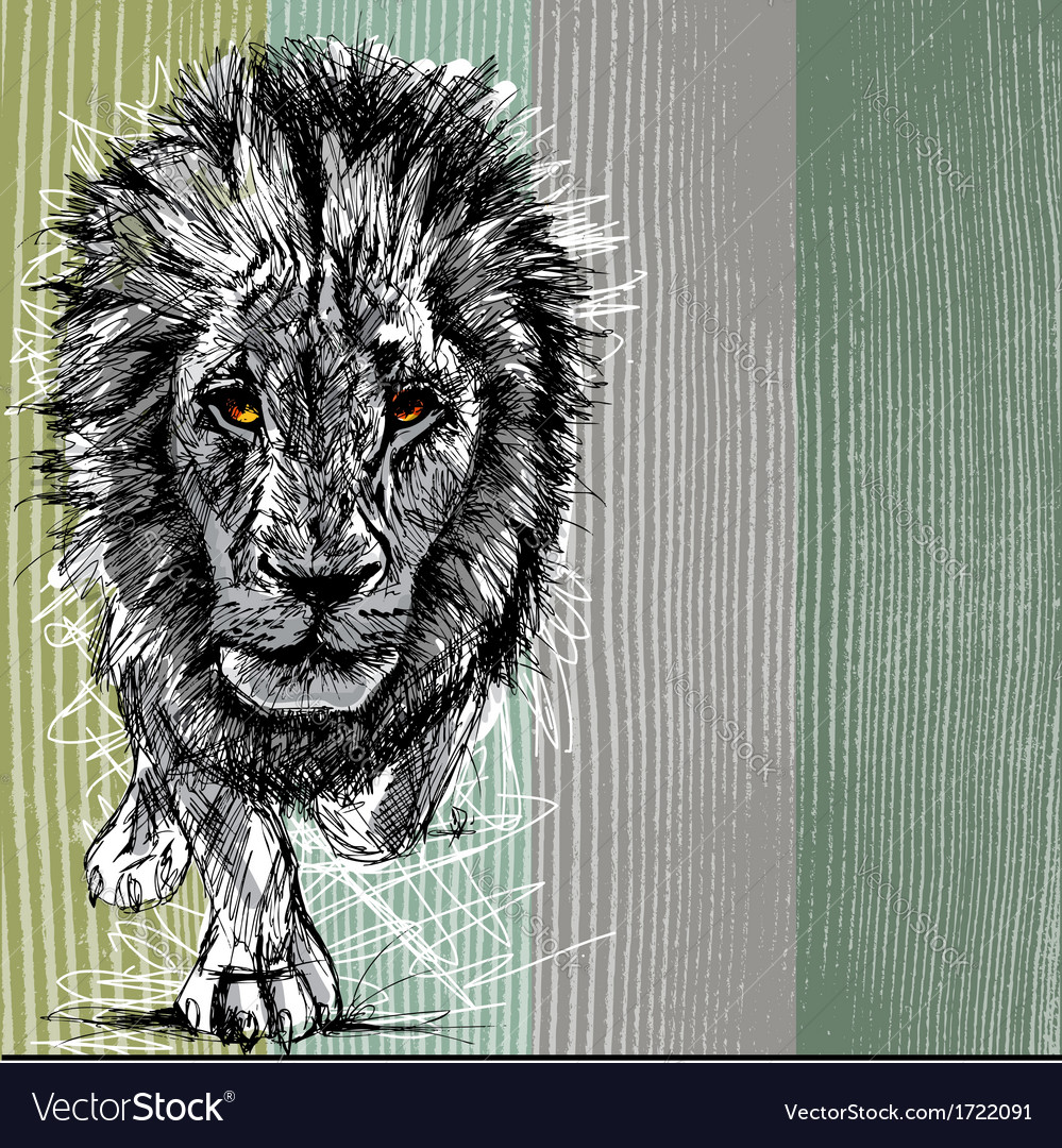 Sketch of a big male african lion vector | Price: 1 Credit (USD $1)