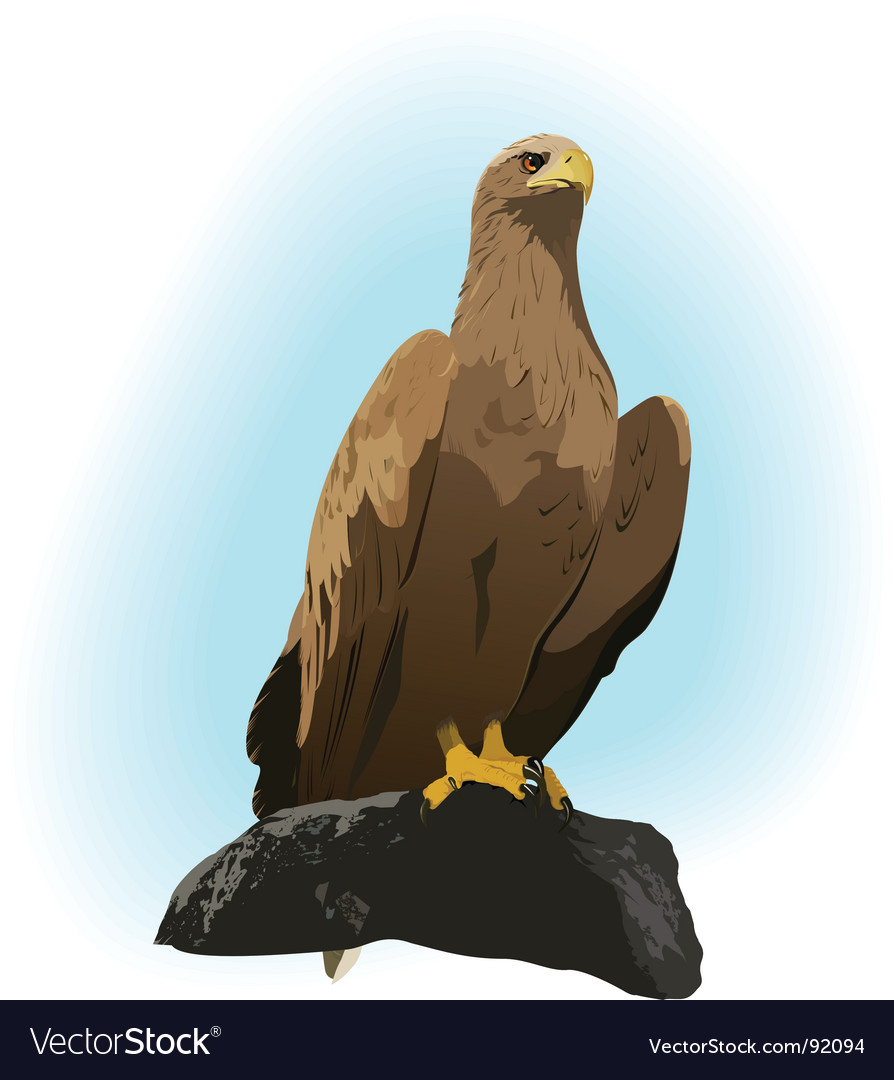 Hawk vector | Price: 3 Credit (USD $3)