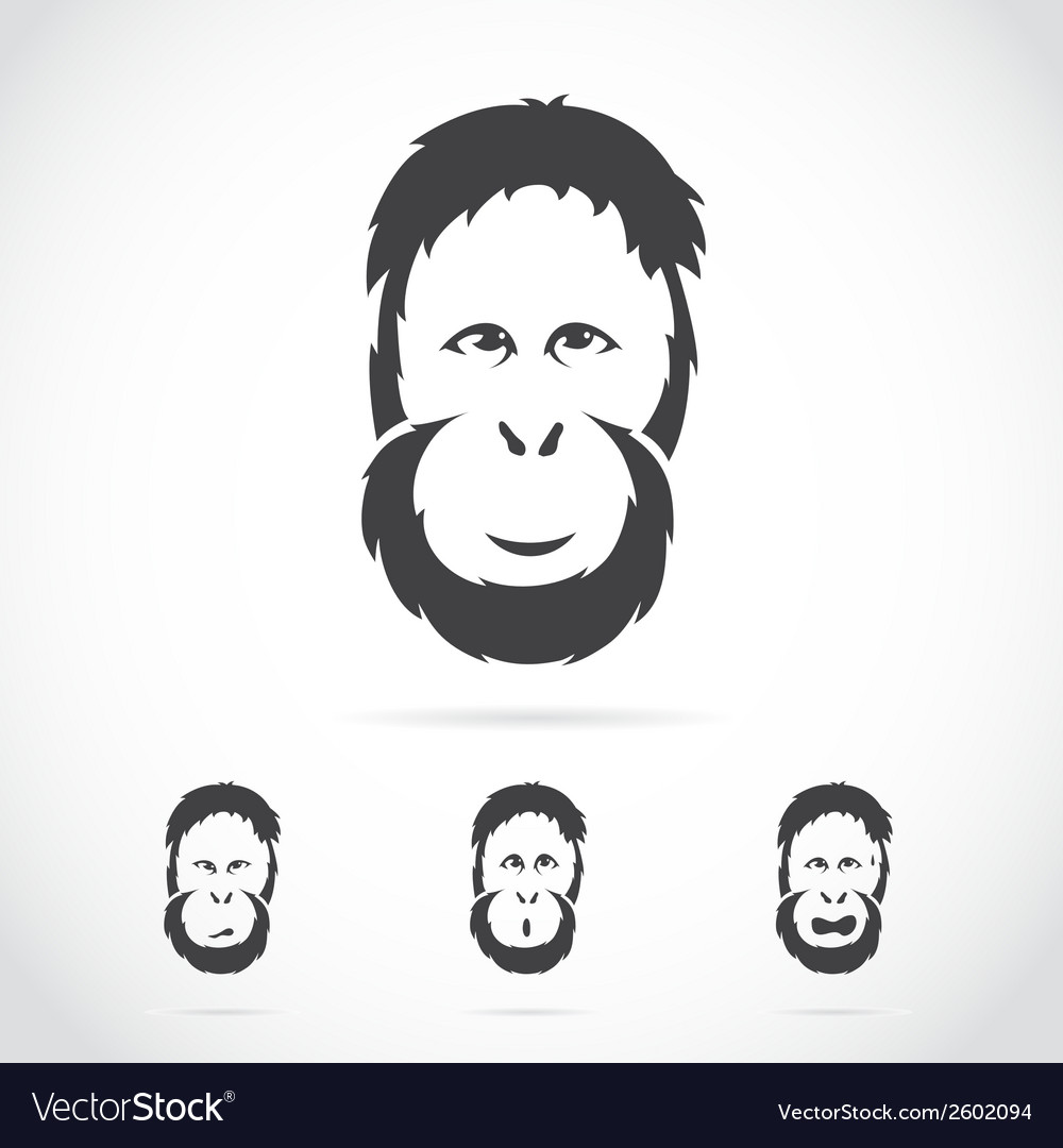 Image of orangutan face vector | Price: 1 Credit (USD $1)