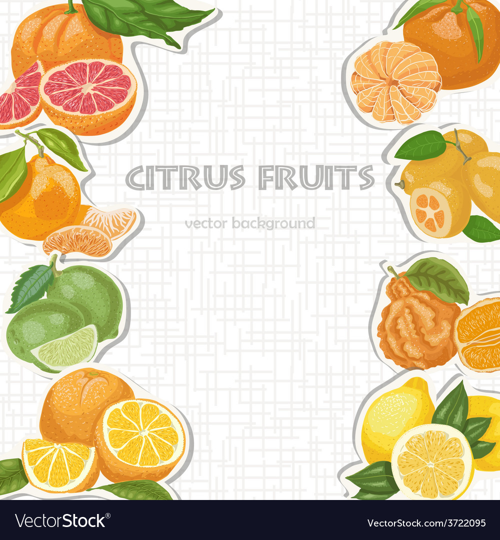 Background with citrus fruits vector | Price: 1 Credit (USD $1)