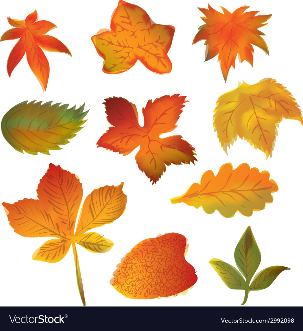 Autumn leaves set on the white background vector | Price: 1 Credit (USD $1)