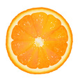 Orange slice background vector