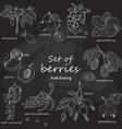 Set of garden berries on dark background vector