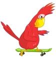Funny parrot skateboarding vector