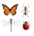 Insects realistic set vector