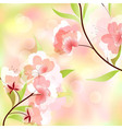 Spring background with cherry blossoms vector