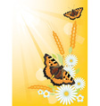 Summer background with flowers and butterflies vector
