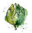 Watercolor of artichoke vector