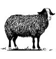 Farm sheep vector