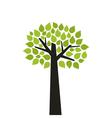 Tree wood vector
