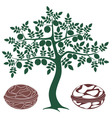 Walnut tree vector