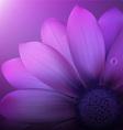 Gerber flower background vector