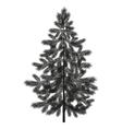 Christmas spruce fir tree silhouette vector