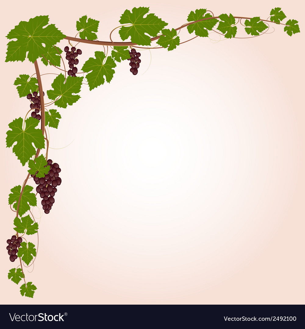 Grape decorative corner vector | Price: 1 Credit (USD $1)