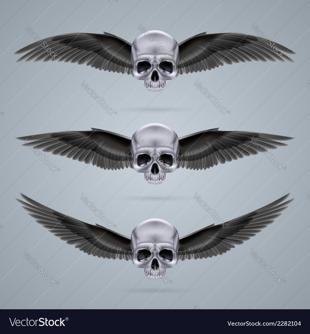 Three metal chrome skulls with two wings vector | Price: 1 Credit (USD $1)