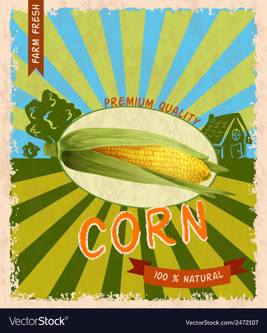 Corn retro poster vector | Price: 1 Credit (USD $1)