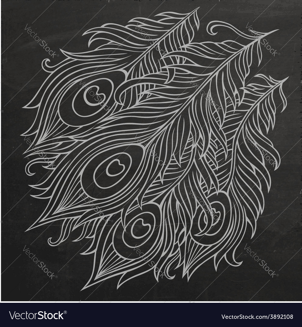 Peacock feathers chalkboard vector | Price: 1 Credit (USD $1)