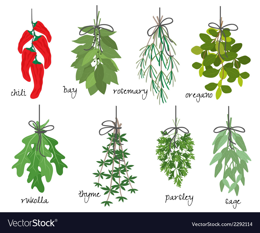 Bunches of medicinal aromatic herbs vector | Price: 1 Credit (USD $1)