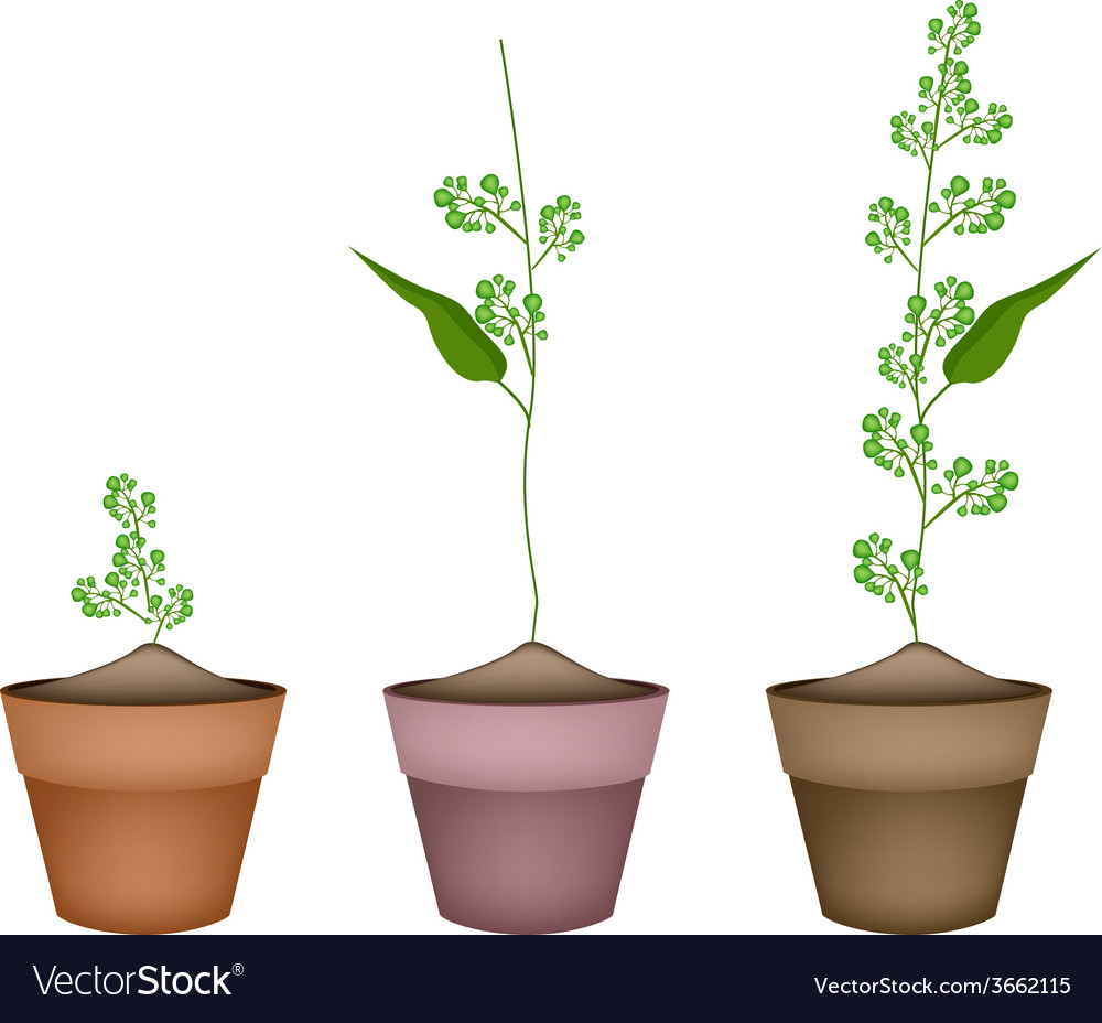 Flower and leaves of neem in ceramic flower pots vector | Price: 1 Credit (USD $1)