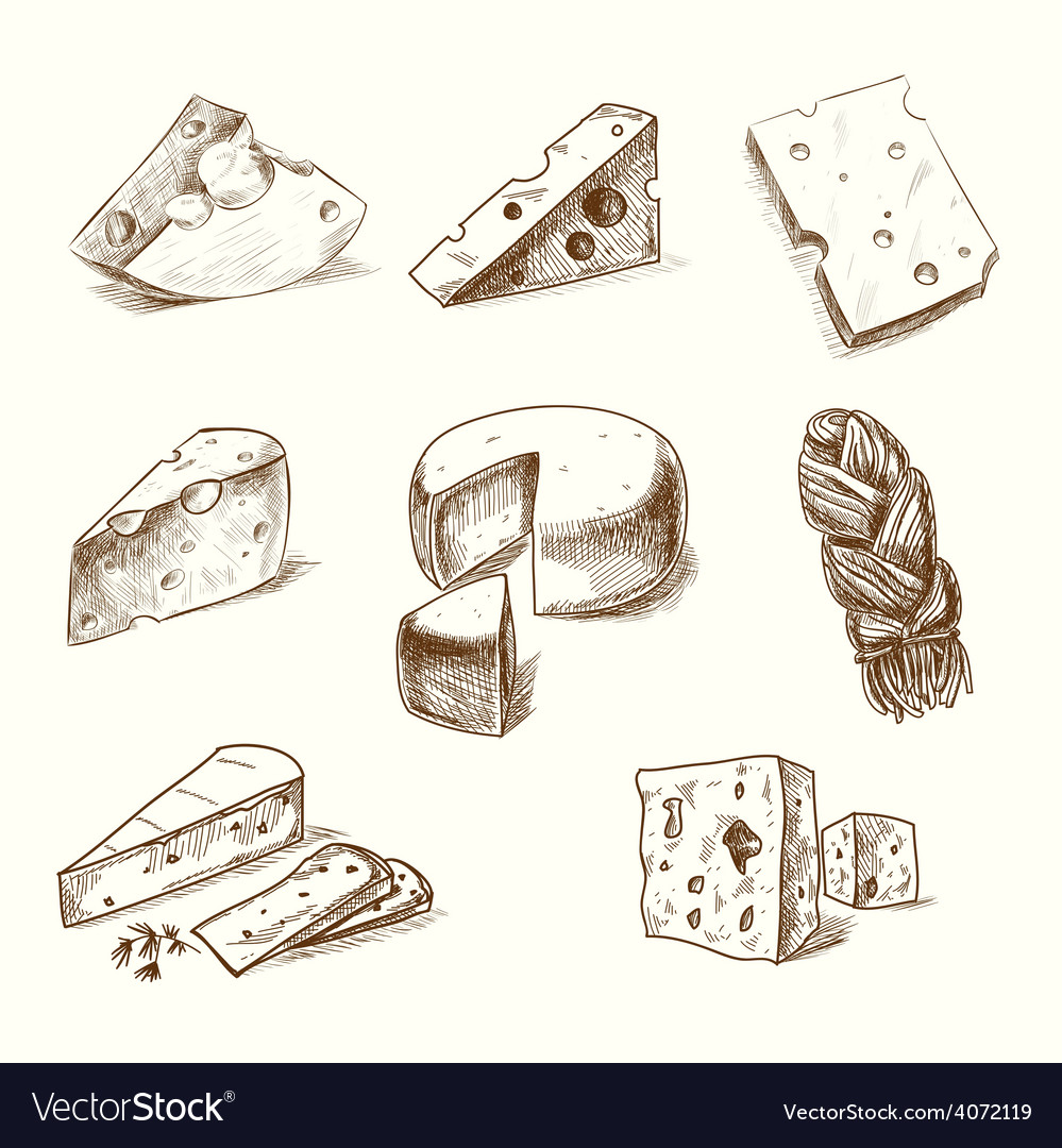 Hand drawn doodle sketch cheese with different vector | Price: 1 Credit (USD $1)