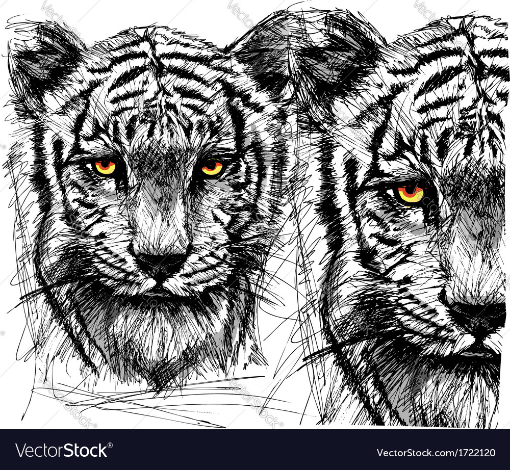 Hand draw sketch of white tiger vector | Price: 1 Credit (USD $1)