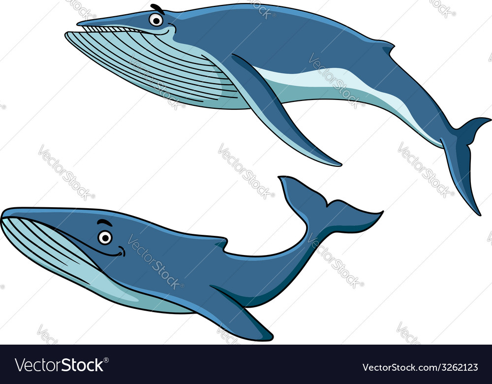 Blue whales swimming underwater vector | Price: 1 Credit (USD $1)