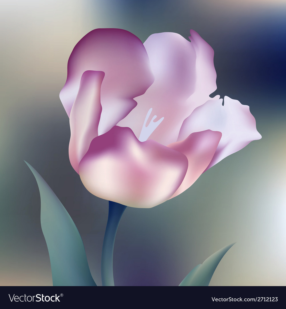 Flower tulips flower spring petal tulip isolated vector | Price: 1 Credit (USD $1)
