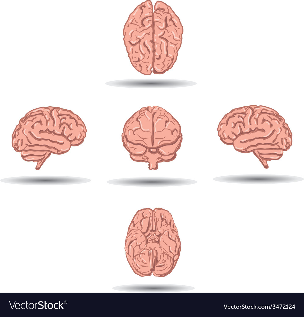 Set of five human brains with shadow from vector | Price: 1 Credit (USD $1)