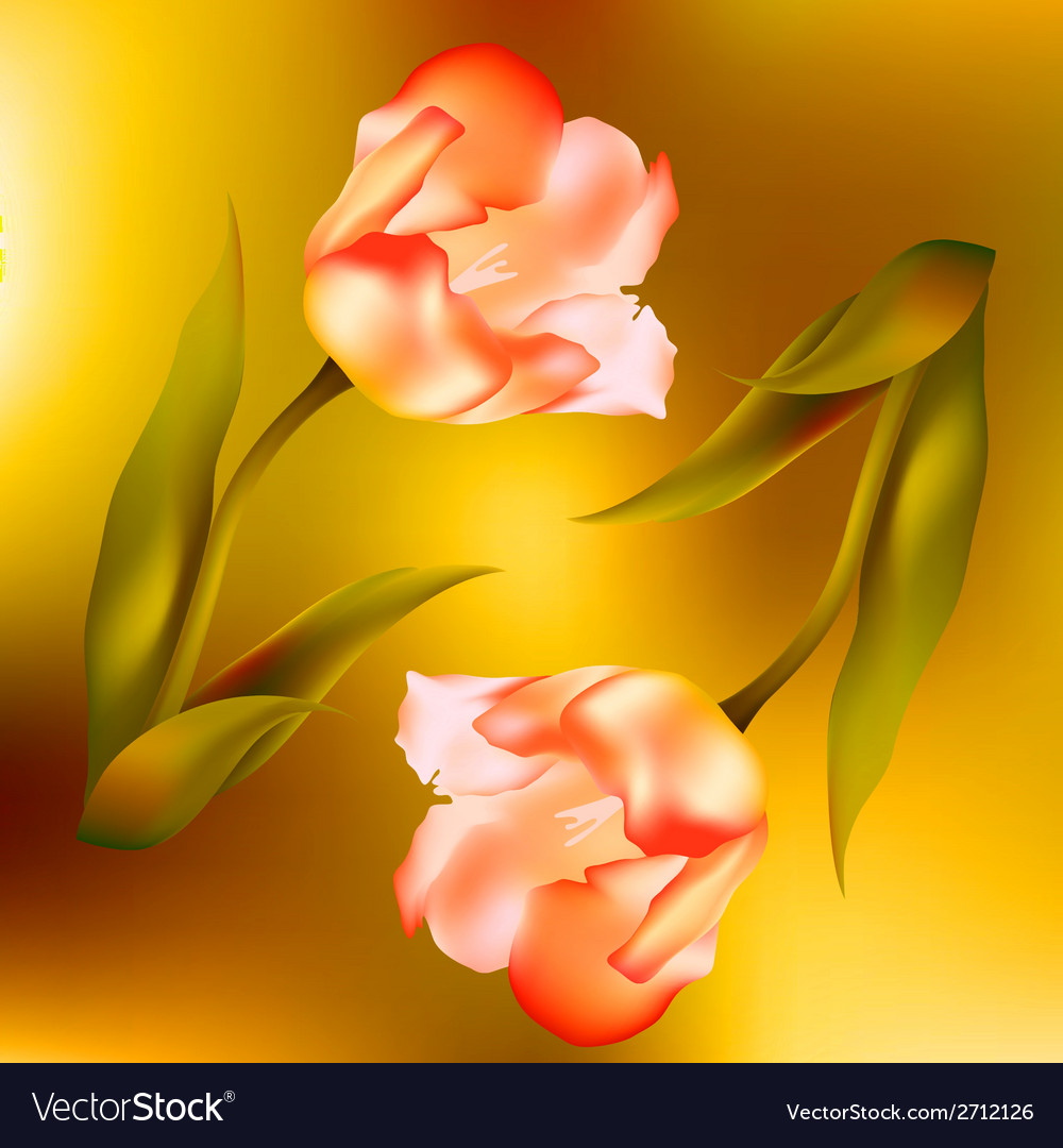Flower tulips flower spring petal tulip isolated vector   Price: 1 Credit (USD $1)
