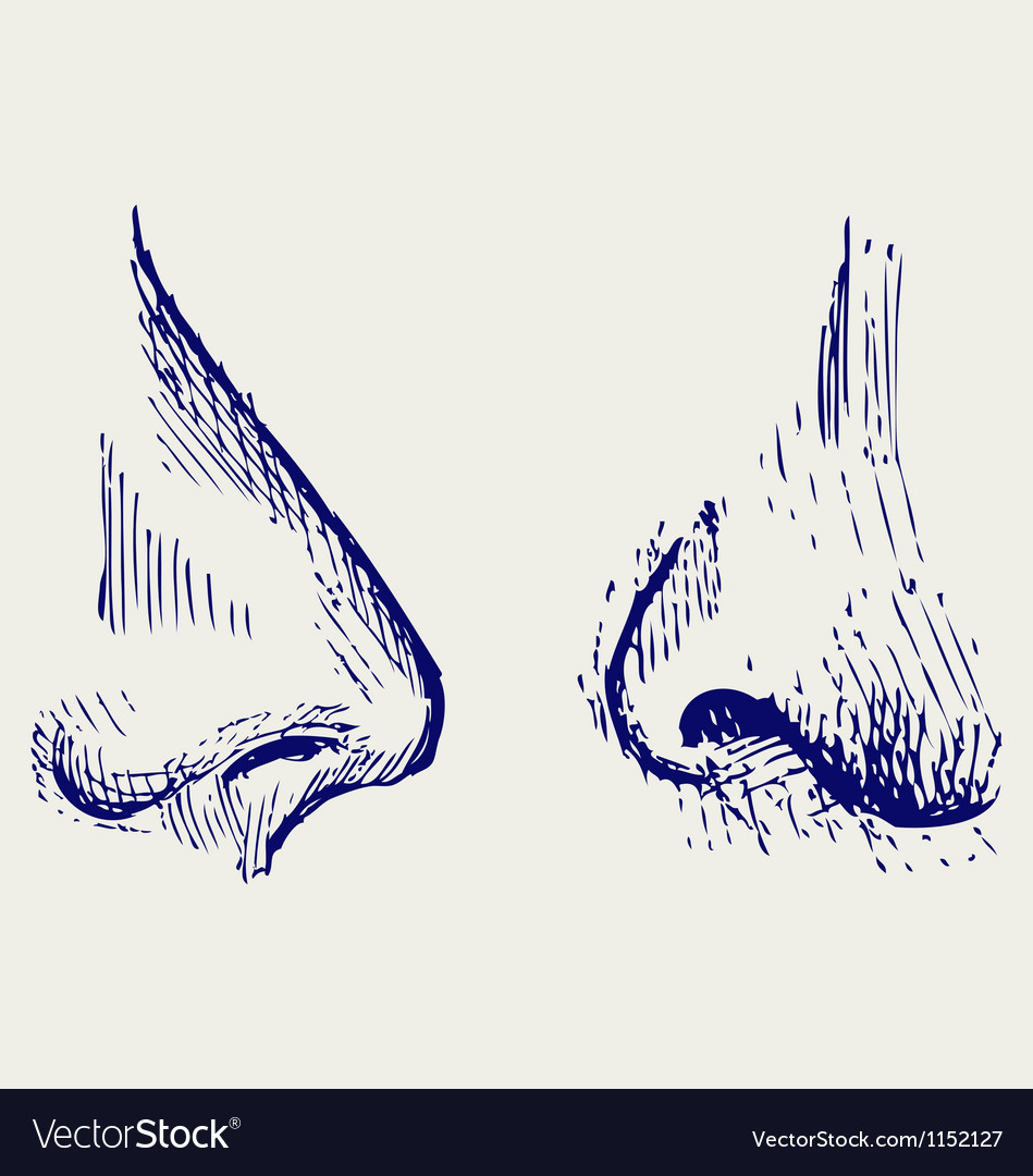 Nose vector   Price: 1 Credit (USD $1)