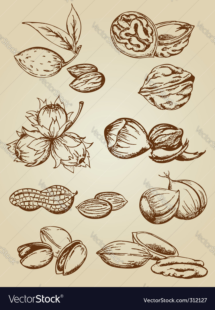 Set of various nuts vector | Price: 1 Credit (USD $1)