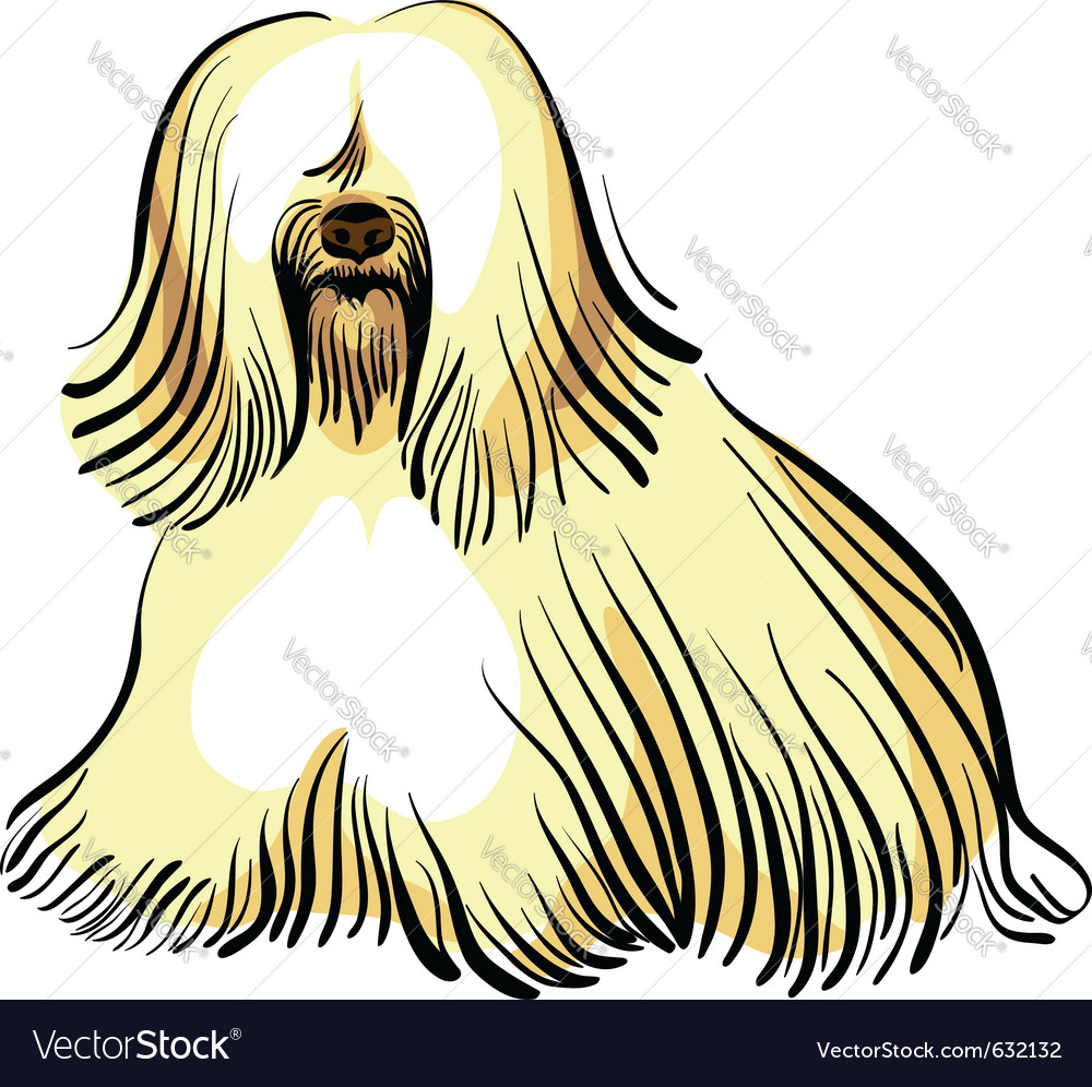 Color sketch of the dog tibetan terrier breed sitt vector | Price: 1 Credit (USD $1)