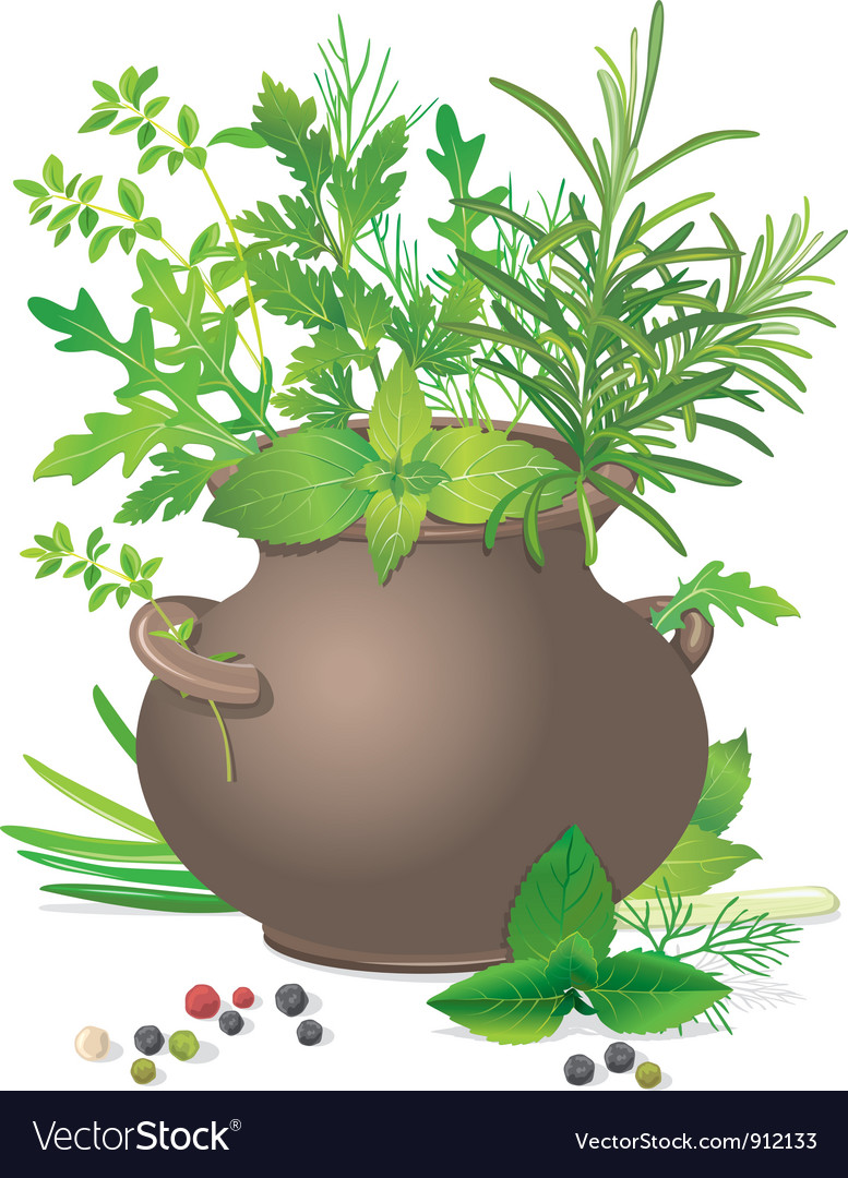 Bouquet fresh herbs in ceramic pot vector | Price: 3 Credit (USD $3)