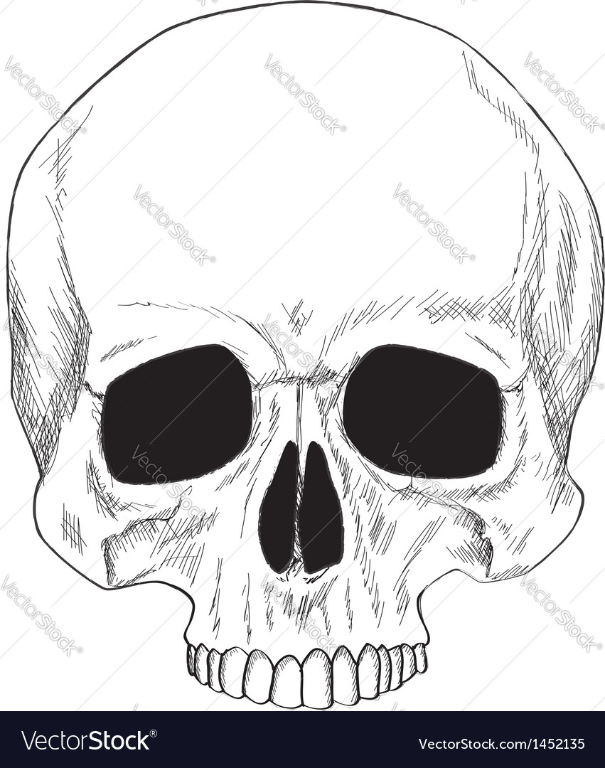 Human skull isolated vector | Price: 1 Credit (USD $1)