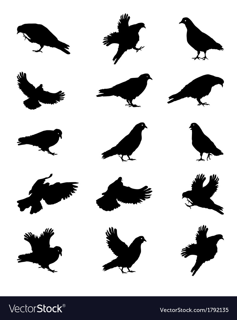 Silhouette of pigeons isolated on white vector   Price: 1 Credit (USD $1)