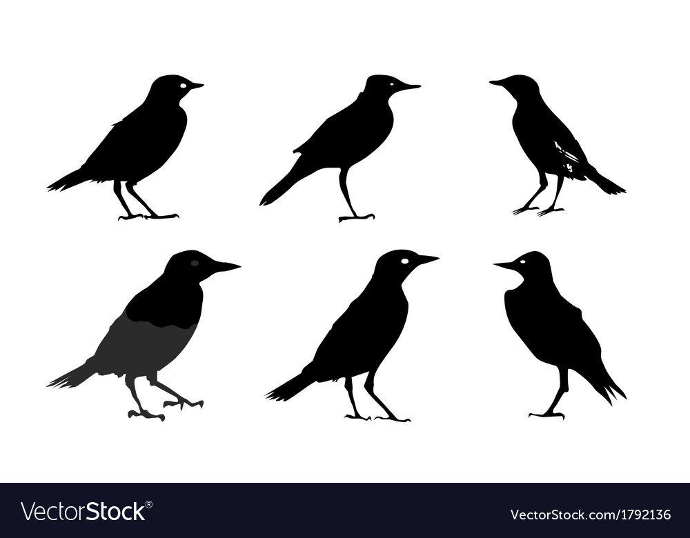 Birds silhouettes isolated on white vector | Price: 1 Credit (USD $1)