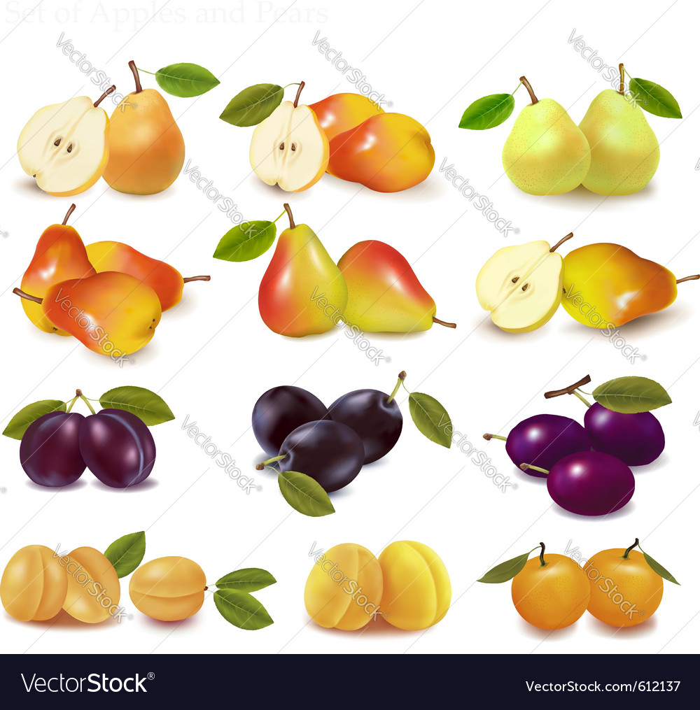 Apricots pears and plums vector | Price: 1 Credit (USD $1)