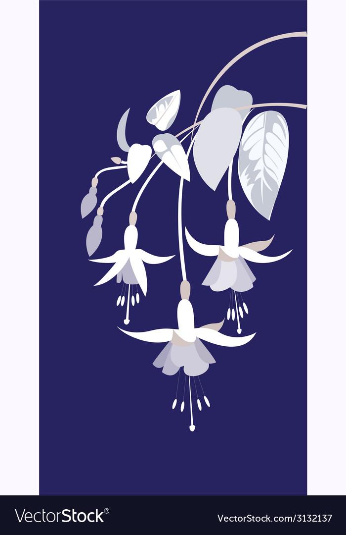 Branch of fuchsia vector | Price: 1 Credit (USD $1)