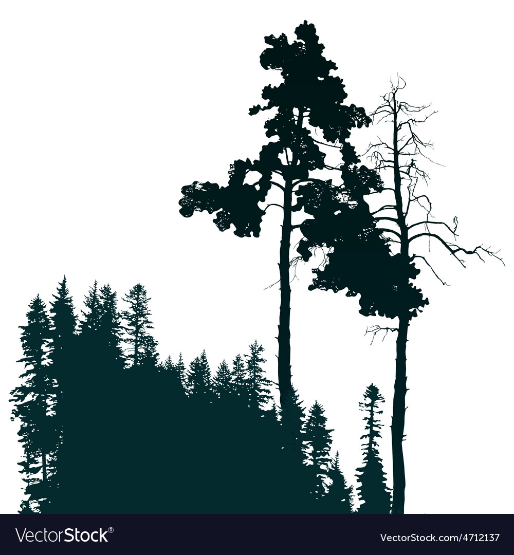 Forest landscape vector   Price: 1 Credit (USD $1)