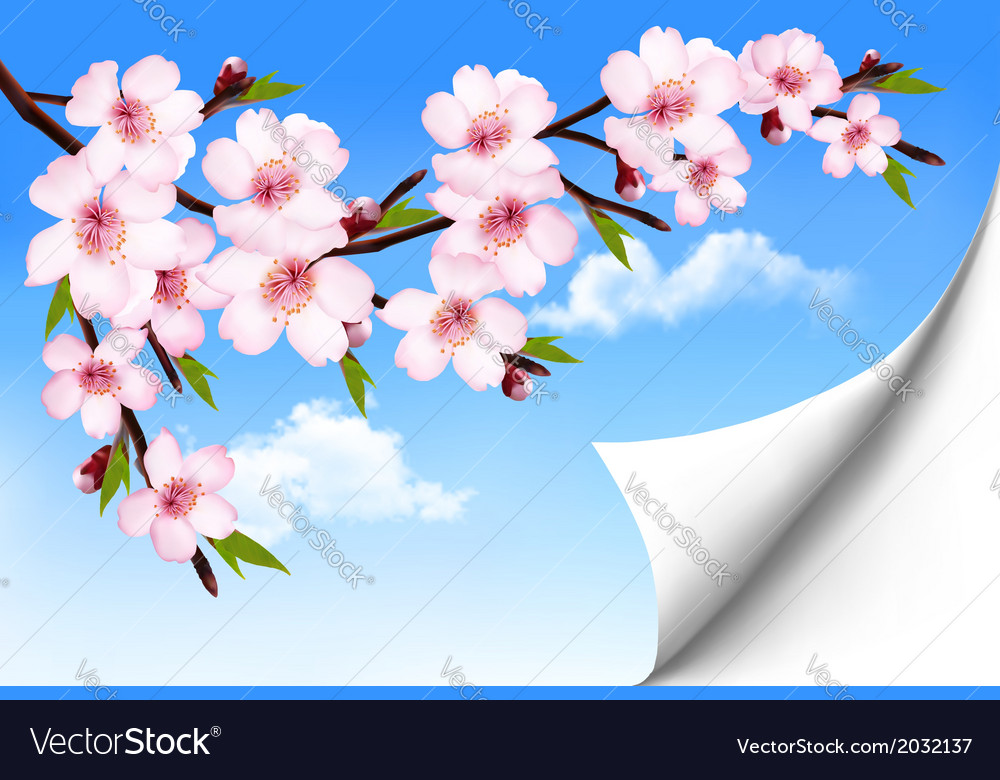 Spring background of a blossoming tree branch with vector | Price: 1 Credit (USD $1)