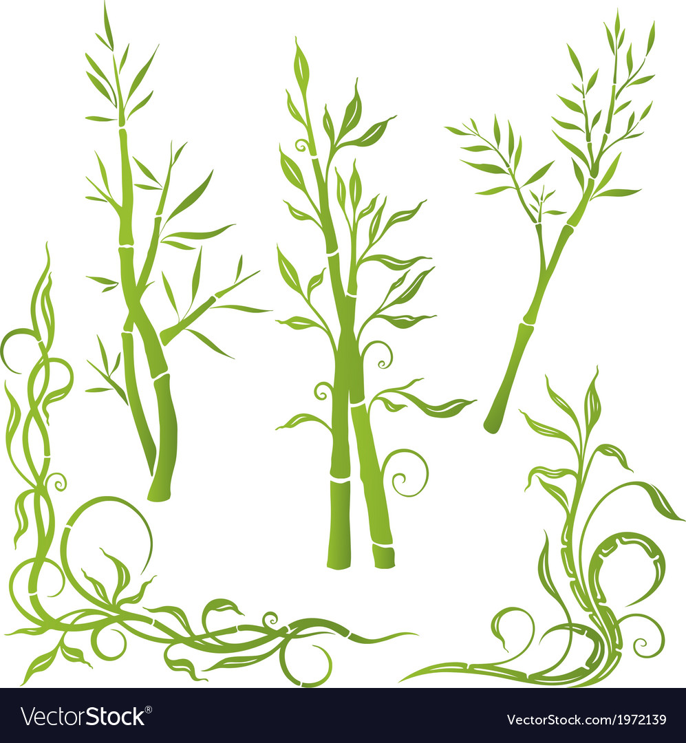 Bamboo plant vector | Price: 1 Credit (USD $1)