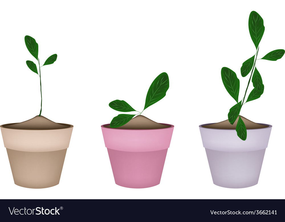 Beautiful ornamental plants in ceramic flower pots vector | Price: 1 Credit (USD $1)