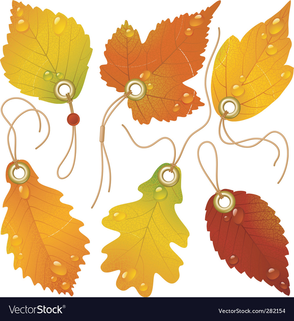 Autumnal discount vector | Price: 1 Credit (USD $1)
