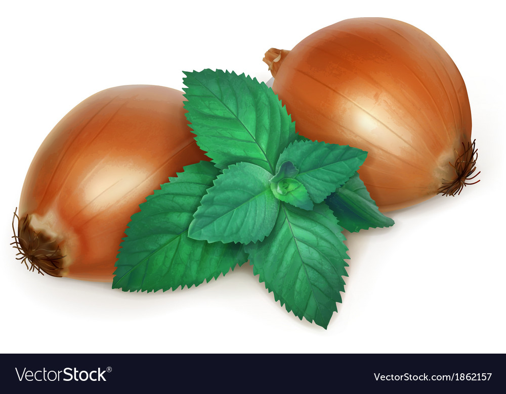 Onion and nettle folk medicine vector | Price: 3 Credit (USD $3)