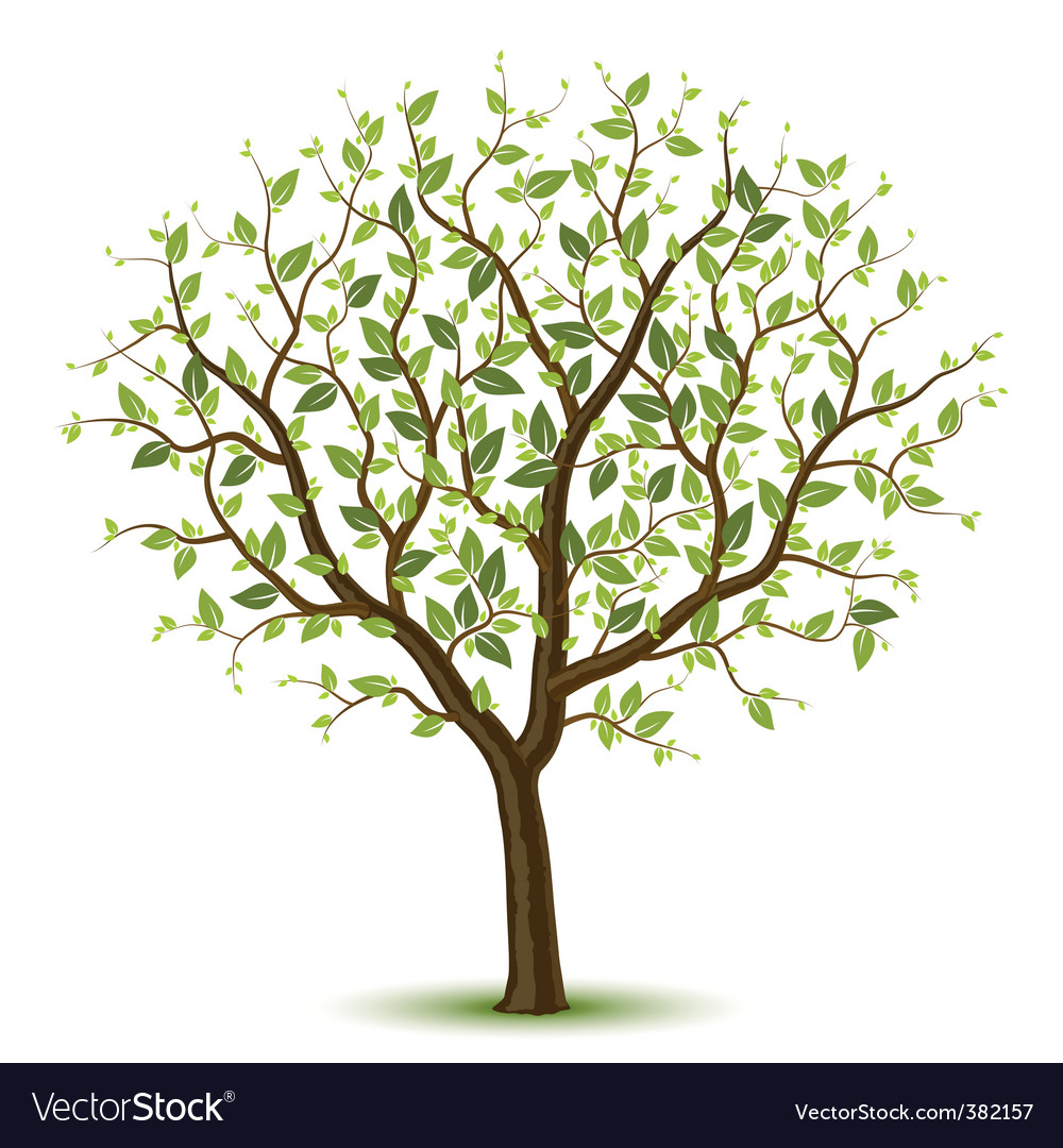 Spring tree vector | Price: 3 Credit (USD $3)